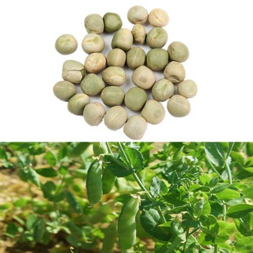 - 30PCS Snow Pea Seeds Green Bean Vegetable Seeds