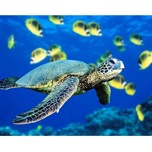 New Arrival!DEESEE(TM)Modern Fashion 5D Diamond EmbroideryRhinestone Not Full Drill Point Drill Sea Turtles Pig Paintings DIY Livingroom Cross Stitch Home Decor (E) ()