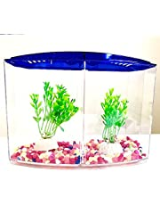 Fighter Aquarium 19 cm accommodates two fish with a transparent and blue separator with crunchy colors and plants