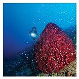 Underwater Kinetics SL3 eLED (L2) Dive