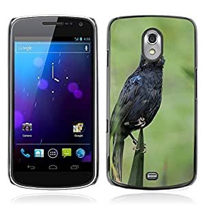 Hot Style Cell Phone PC Hard Case Cover // M00108442 Zoo Netherlands Holland Bird Blue // Samsung Galaxy Nexus GT-i9250 i9250