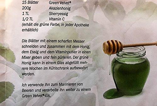 Australisches Zitronenblatt Green Velvet Kr/äuter Pflanze Ideal f/ür Smoothie!