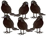 Halloween Black Feathered Small Crows – 6 Pc Black Birds Ravens Props D (Small Image)