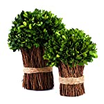 Preserved-Boxwood-Ball-New-Mushroom-Shape-Design-Use-as-Bouquet-or-Boxwood-Ball-in-Delicate-Containers-DIY-or-Decorative-Purposes-Half-Ball-Bundle-10-inch