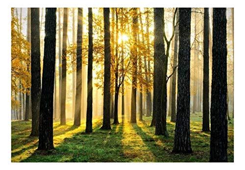 A Peaking View Through The Forest of The Morning Sunrise Wall Mural