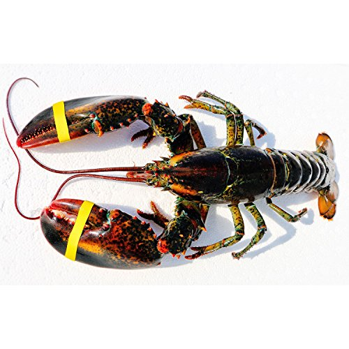 Live Wild Caught Maine Lobster Approx. (1.5 lb. ea., 6 lobsters about 10lb) Express Shipped Chilled by Ready Seafood