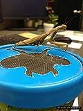 Praying Mantis Egg Case with Hatching Habitat Cup - 2 Praying Mantids Egg Cases