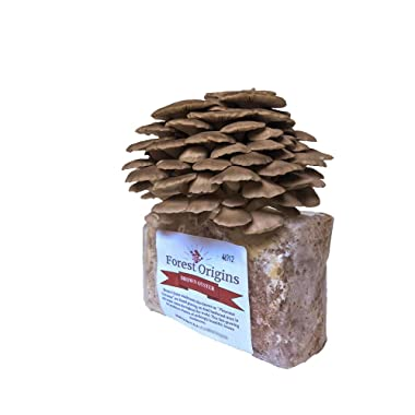 Brown Oyster Mushroom Growing Kit - All in One Indoor Grow Kit - Grow Edible Mushroom in Your Home - Top Gardening Gift, Holiday Gift, Unique Gift, Mother's Day Gift, Birthday Gift, Fathers Day Gift
