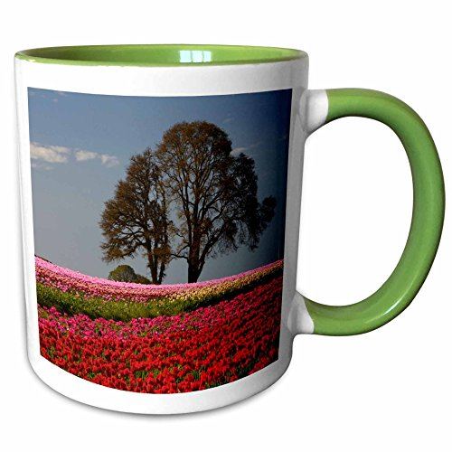 3dRose Danita Delimont - Michel Hersen - Flowers - Tulip Festival in Woodburn, Oregon, USA - 11oz Two-Tone Green Mug - Outlet Oregon Woodburn