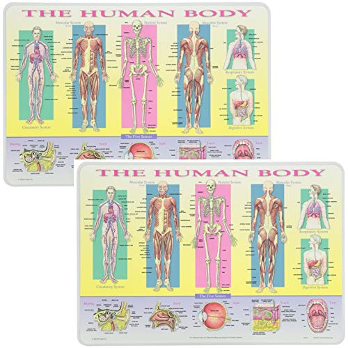 Painless Learning Educational Placematsfor Kids The Human Body Laminated Washable Reversible Activities 2 Pack