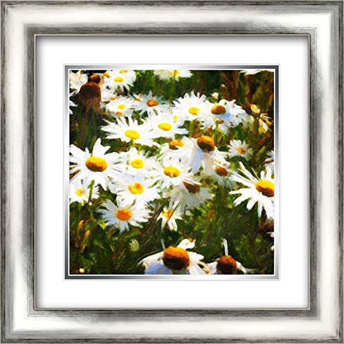 Sunlit Daisies 20x20 Silver Contemporary Wood Framed and Double Matted Art Print by Hausenflock, ()