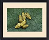 Framed Print of Tortoise Beetle, Coleoptera, larva on Mexican Olive tree leave, The Inn at