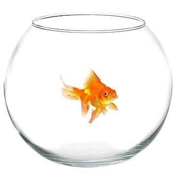 TrAdE shop Traesio® Ampolla pecera para peces de cristal 16 cm Acuario Pez Rojo Mantel: Amazon.es: Hogar