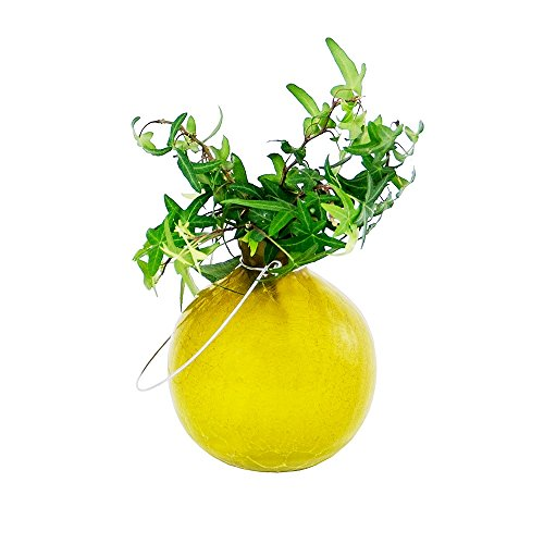 Buy achla goblet rooting vase fern green