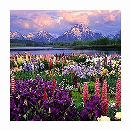 Fresh Canadian Seed Caribou Seed Company: Eastern Wildflower Seed Mix Beautiful Landscaping 17 Different Annuals /& Perennials