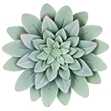 Hook 4 You Green Succulents Metal Wall Flowers Botanical Green Succulent Metal Wall Decor