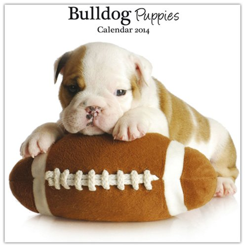 Bulldog Puppies 2014 Wall Calendar