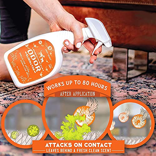 ANGRY ORANGE Enzyme Cleaner & Pet Stain Remover Spray - 32oz Pet Odor Eliminator for Home, Carpet, and Floor - Cat and Dog Urine Destroyer (Fresh Citrus Scent)