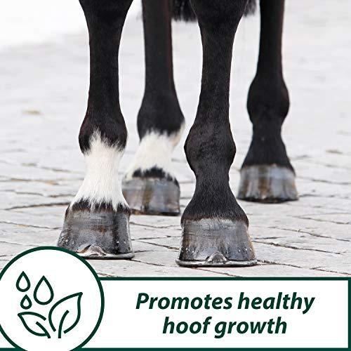 Horseshoer's Secret Hoof Supplement Concentrate, 11 Pound