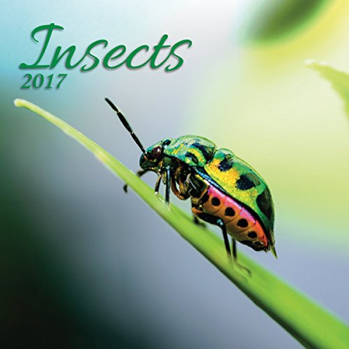 Turner Photo 2017 Insects Photo Wall Calendar, 12 x 24 inches opened (17998940028)