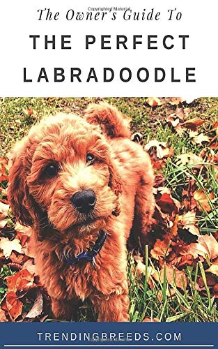 The Owner's Guide To The Perfect Labradoodle