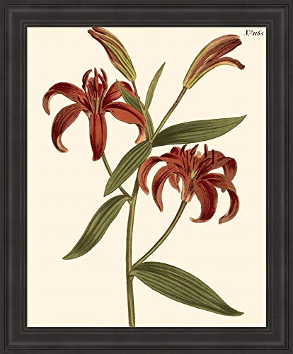 Fiery Florals I by Samuel Curtis Framed Art Print Wall Picture, Traditional Black Frame, 19 x 23 inches