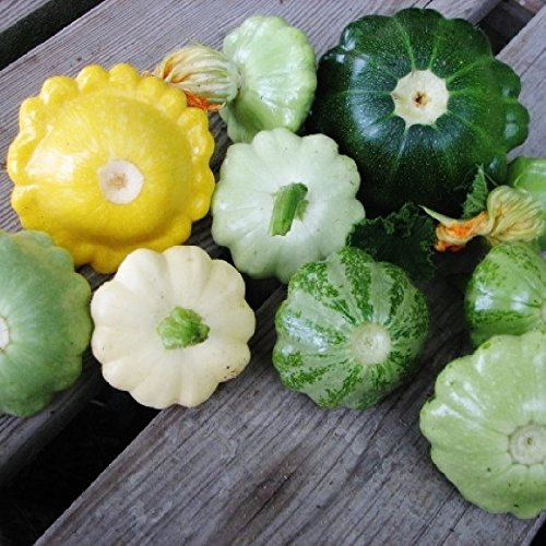 Squash (Summer) Seeds - Scallop Blend - Packet, Vegetable Seeds