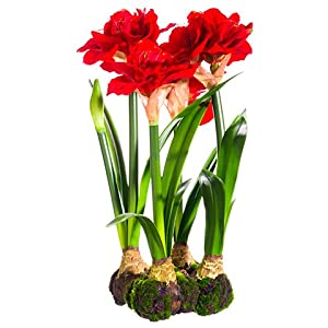 "22"" Standing Amaryllis with Bulb Red (pack of 1) 13"