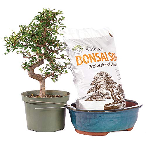 Which are the best bonsai soil evergreen available in 2020?