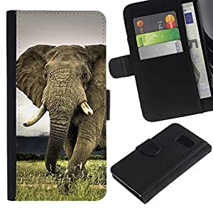 iKiki Tech / Cartera Funda Carcasa - Cute Elephant Majestic Creature Animal - Samsung Galaxy S6 SM-G920