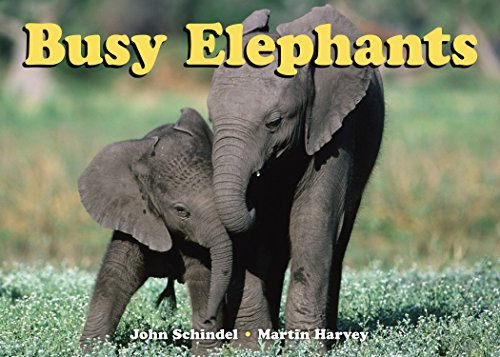 Price comparison product image Busy Elephants (A Busy Book)