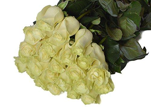 Farm2Door Wholesale Roses (Long Stemmed - 50cm) from Colombia - Farm Direct Wholesale Fresh Flowers