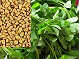 Fenugreek Herb (Trigonella foenum-graecum) Seeds, The Main Ingredient Curry Recipes (5 Pounds, 144K Seeds)