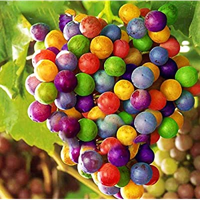 AtFipan 50Pcs/Pack Grape Seeds Rainbow Colorful Garden Fruit Plants Sweet Kyoho Grape Seeds: Kitchen & Dining