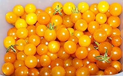 David's Garden Seeds Tomato Currant Yellow (Yellow) 100 Open Pollinated Seeds
