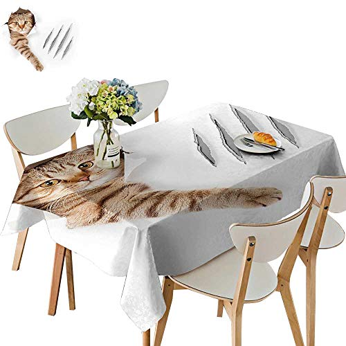 UHOO2018 Square/Rectangle Polyester Table Cloth in Wallpaper Hole Claw Playful Kitten Cute Pet Picture Brown White Easy Care Spillproof,54 x102inch (Best Bbq In Katy)