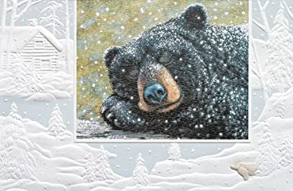 amazon com pumpernickel press boxed christmas cards bear dreams