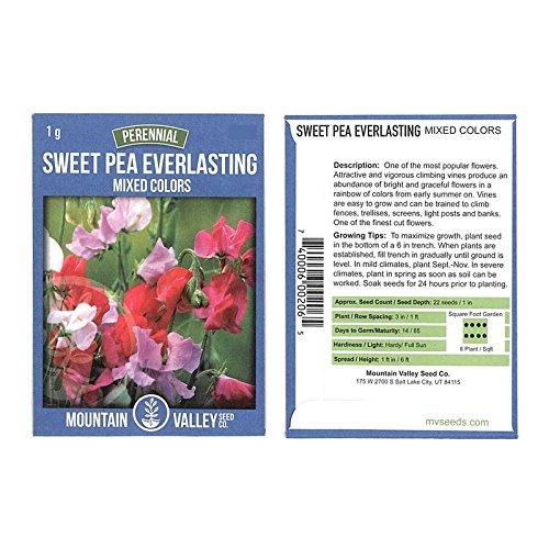 Rambling Vine (Sweet Pea Flower Garden Seeds - Everlasting - 1 Gram Packet - Perennial Vine Flower Gardening Seeds - Rose, White & Red)