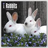 Rabbits 2017 Square (Multilingual Edition)