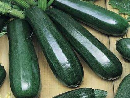 Review Zucchini Seeds – Black