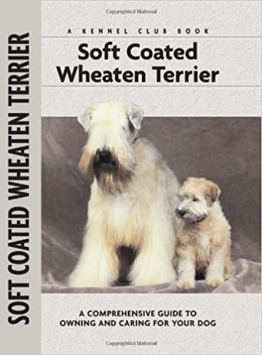 Soft coated wheaton terrier photo | Caring for Your Soft