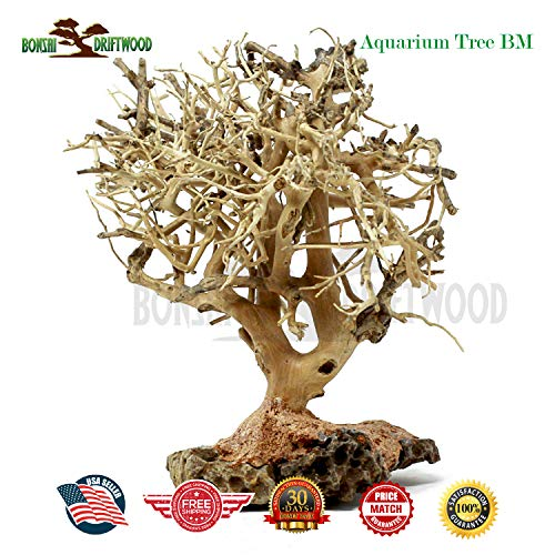 Bonsai Driftwood Random Pick Aquarium Decoration Tree, Moss Tree, Aquarium Driftwood Tree, Aquarium Tree (6 Inch Height) Natural, Handcrafted Fish Tank Decoration | Helps Balance pH ()