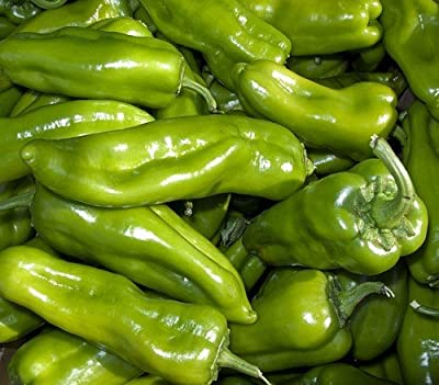 Cubanelle Pepper 20 Seeds-Frying-Green to Yellow to Red