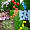 Seed House-KOUYE 40pcs Lilies of The Valley Seeds Fragrant Rarities Lilies of The Valley Flower Bulbs Perennial Hardy Bell Flower for Balcony/Garden