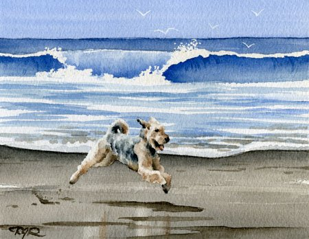 (Airedale Terrier at the Beach Art Print By Watercolor Artist DJ Rogers)