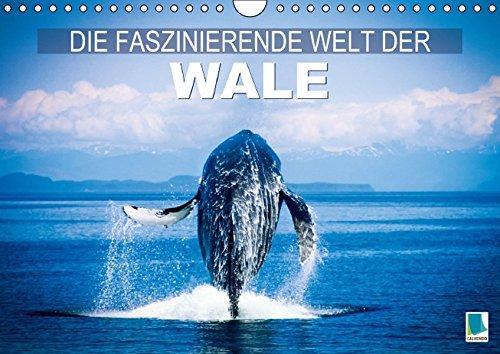 die-faszinierende-welt-der-wale-wandkalender-2015-din-a4-quer-wale-in-den-tiefen-der-ozeane-monatskalender-14-seiten-calvendo-tiere