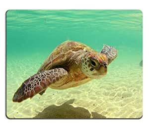 Animal Wildlife Sea Turtle Marine Coast Ocean Mouse Pads Customized Made to Order Support Ready 9 7/8 Inch (250mm) X 7 7/8 Inch (200mm) X 1/16 Inch (2mm) High Quality Eco Friendly Cloth with Neoprene Rubber Luxlady Mouse Pad Desktop Mousepad Laptop Mousepads Comfortable Computer Mouse Mat Cute Gaming Mouse pad