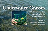 Underwater Grasses in Chesapeake Bay and Mid-Atlantic Coastal Waters : Guide to Identifying Submerged Aquatic Vegetation, Bergstrom, Peter Wasson, 0943676649