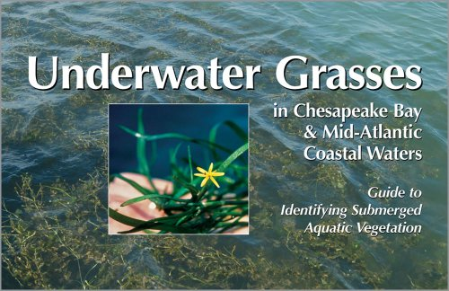 Underwater Grasses In Chesapeake Bay   Mid Atlantic Coastal Waters  Guide To Identifying Submerged Aquatic Vegetation
