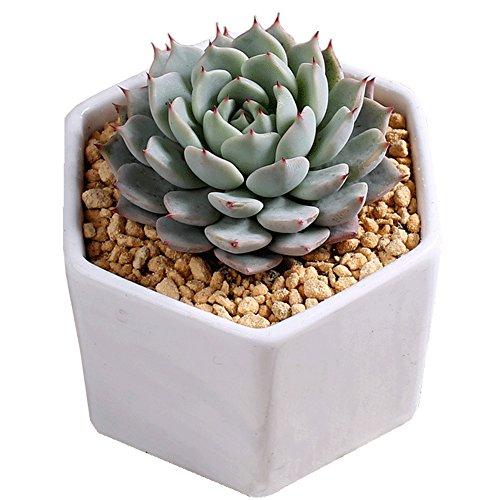 Ceramic Flowing Glaze Base Serial Set Succulent Plant Pot Cactus Plant Pot Flower Pot Container Planter Bonsai Pots With A Hole by Bettli (1, Hexangular2)